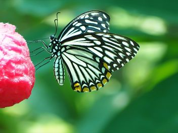 Butterfly on red flower - Free image #201575