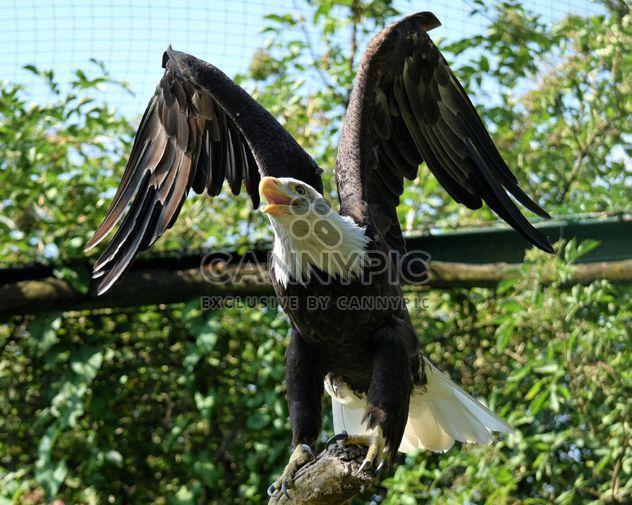 Retrato da águia - Free image #201635