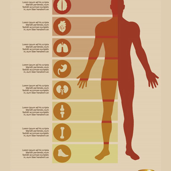 Free Male Body Infographics Vectors - Free vector #202005