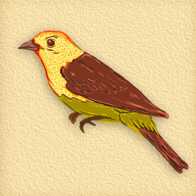Bird 50 - бесплатный vector #203955