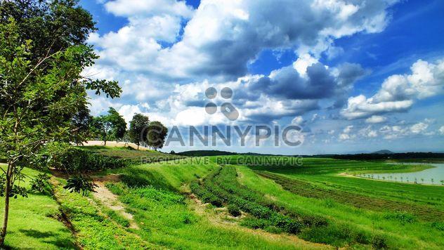 jardin, montagne, nuage, ciel, pays, arbre, vert, naturel, nature - image gratuit #205075