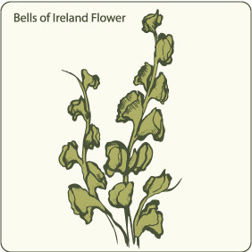 Bells Of Ireland Flower - бесплатный vector #209635