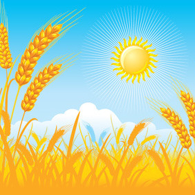 Vector Wheat Field - vector gratuit #212145