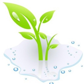 Plant With Water - vector gratuit #216565