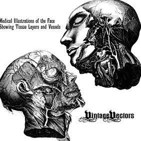 Peeled Back Face Medical Illustration - бесплатный vector #219775