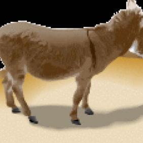 Donkey - Free vector #223735