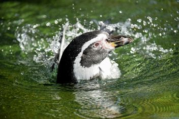 Penguin in The Zoo - image gratuit(e) #225325