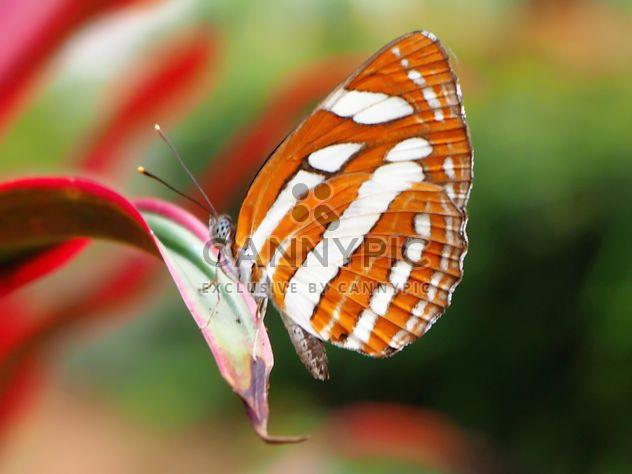 Gros plan de papillon - image gratuit #225365