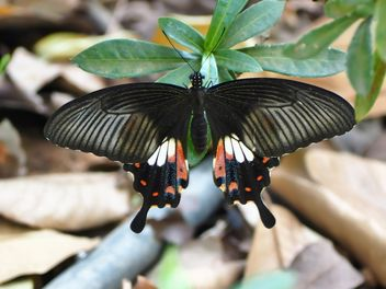 Butterfly close-up - Free image #225425