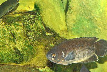 Aquarium - image #229405 gratis