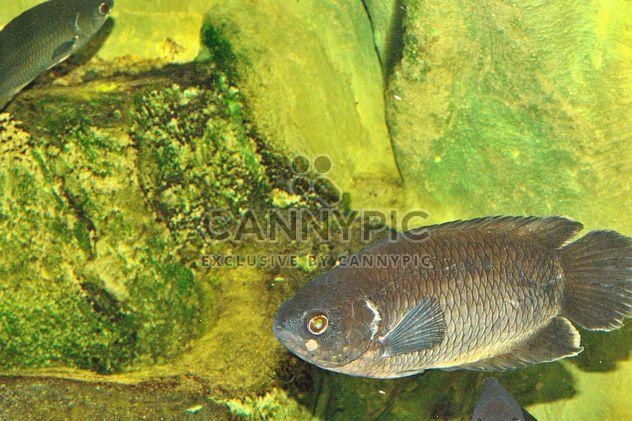 Aquarium - Kostenloses image #229405