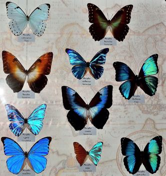 Collection of butterflies - Kostenloses image #229455