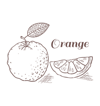 Free orange with leaf in engraving style vector - Free vector #235825