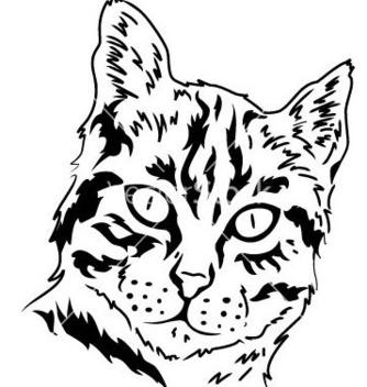 Free cat vector - Kostenloses vector #239115