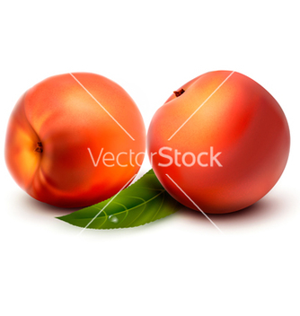 Free two fresh peach vector - Free vector #242545