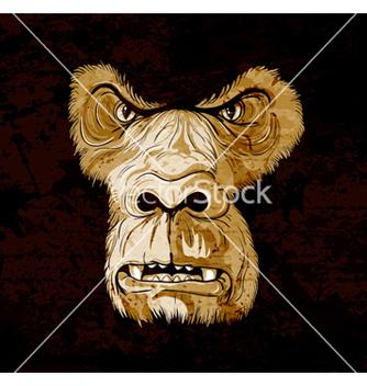 Free grunge gorilla face vector - vector gratuit #257365