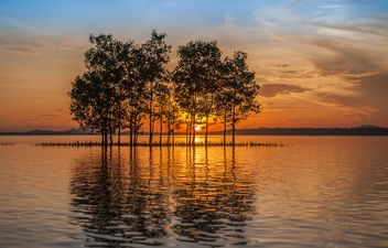 Trees growing from water - image #271795 gratis