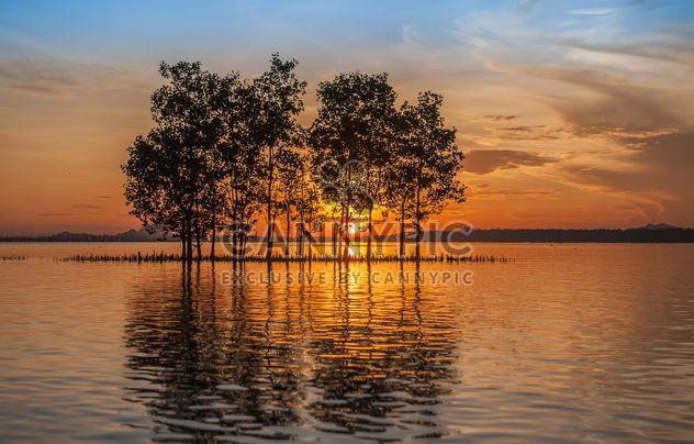 Деревья, растущие из воды - бесплатный image #271795