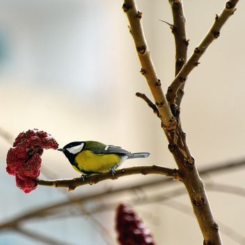 Titmouse on tree branch - image gratuit #271945