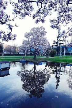 spring magnolia blossom - image #272335 gratis