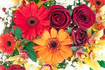 Gerberas and roses background - image gratuit #272585