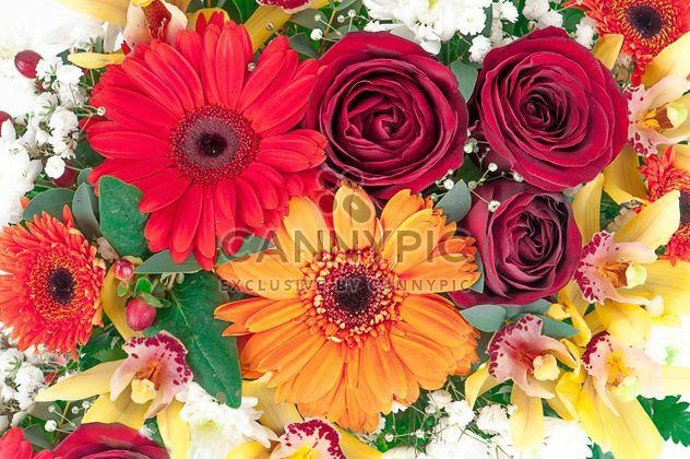 Gerberas y rosas de fondo - image #272585 gratis