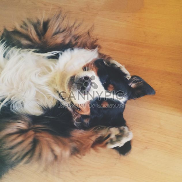 Um cachorro sorrindo - Free image #272945