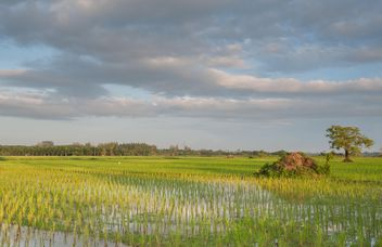Rice fields - image #272955 gratis