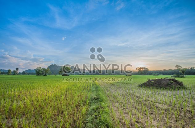 Rice fields - Free image #272965
