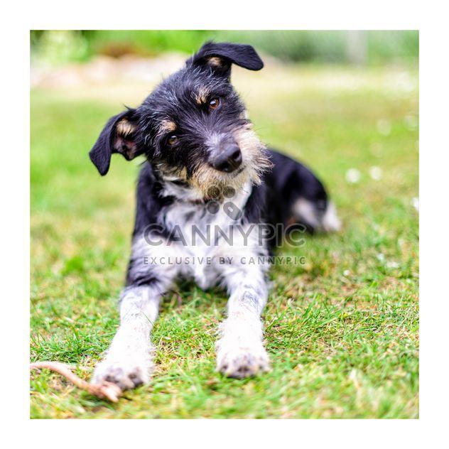 Mignon chien hirsute - image gratuit #272985