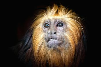 Monkey portrait - image #273015 gratis
