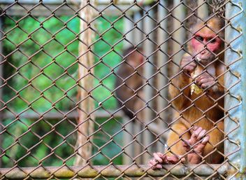 monkey in the zoo - image gratuit #273055