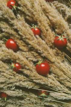Tomatoes in dry spicas - бесплатный image #274855
