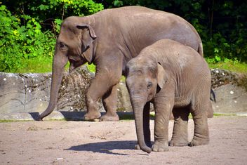 elephant with his son - бесплатный image #274935