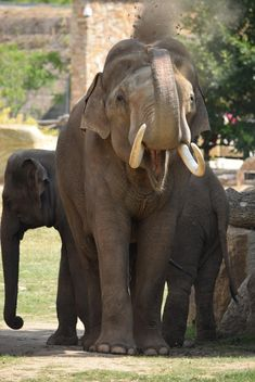Elephant in the Zoo - image gratuit(e) #274945