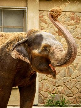 Elephant in the Zoo - image gratuit(e) #274955
