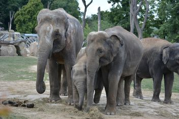 Elephants in the Zoo - Free image #274965