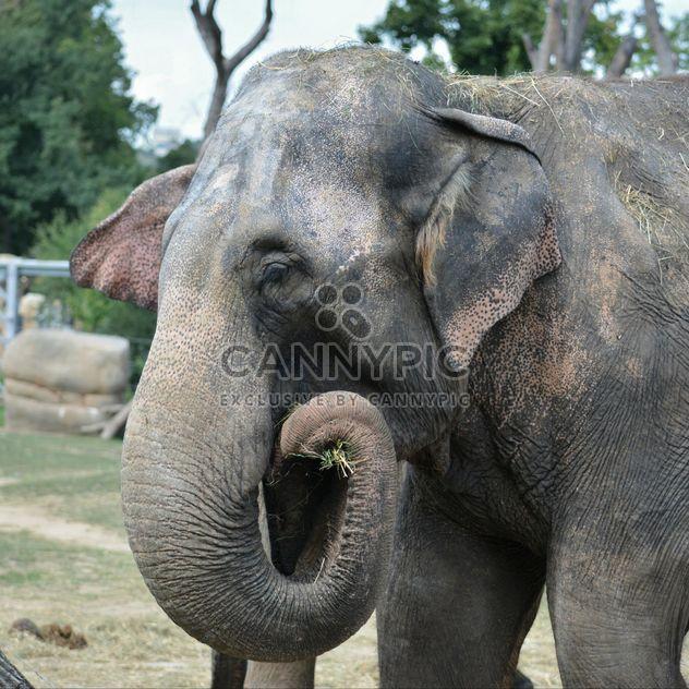 Elefante en el zoológico - image #274975 gratis