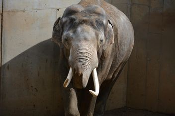 Elephant in the Zoo - Free image #274985