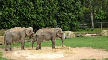 Elephants in the Zoo - image gratuit #274995