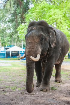 Elephant in the Zoo - image gratuit(e) #275015