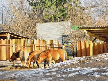 Wild horses in th Zoo - image #275025 gratis