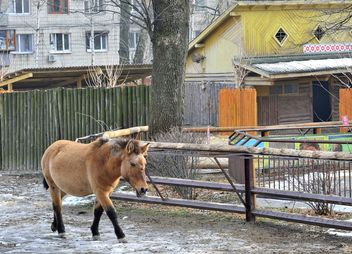 Wild horse in th Zoo - Free image #275035
