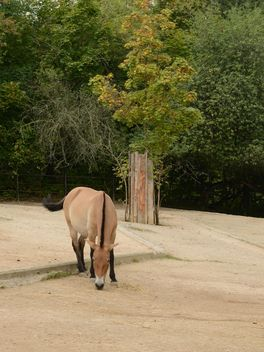 Brown horse - Free image #275065
