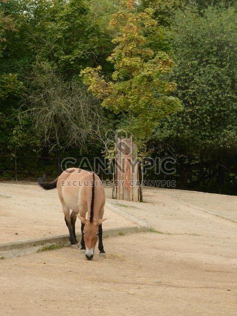 Cavalo marrom - Free image #275065