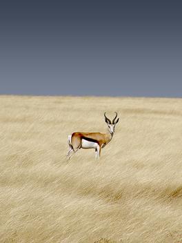 Springbok, Etosha National Park - Free image #275485