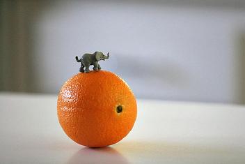 elephant - image #275595 gratis