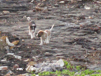 Puppies At Worli Having Fun - image #275605 gratis