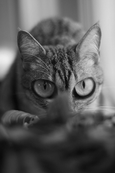 I see U! - Kostenloses image #275725