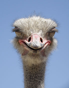 Evil Ostrich? - Free image #275765